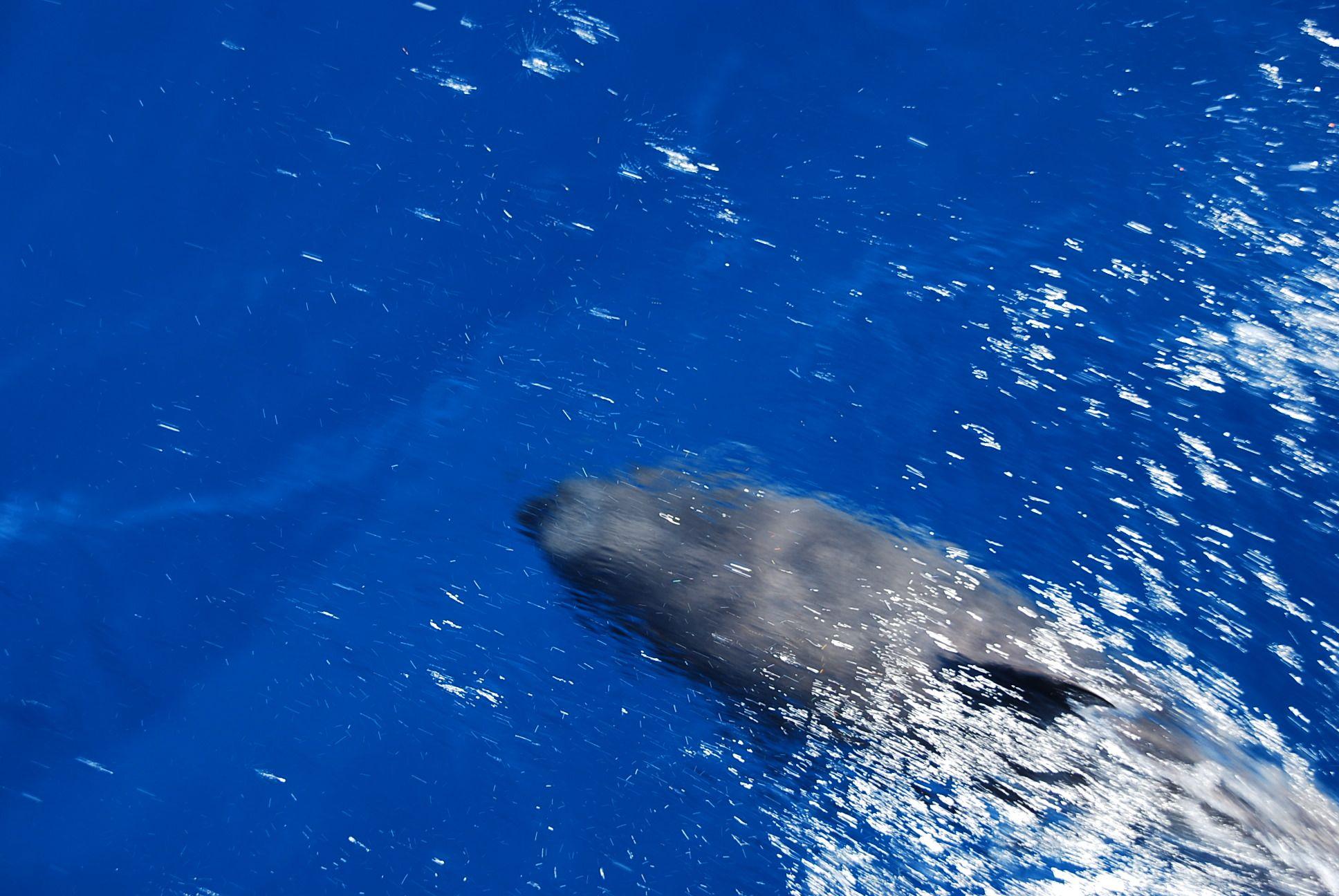 delphin_1