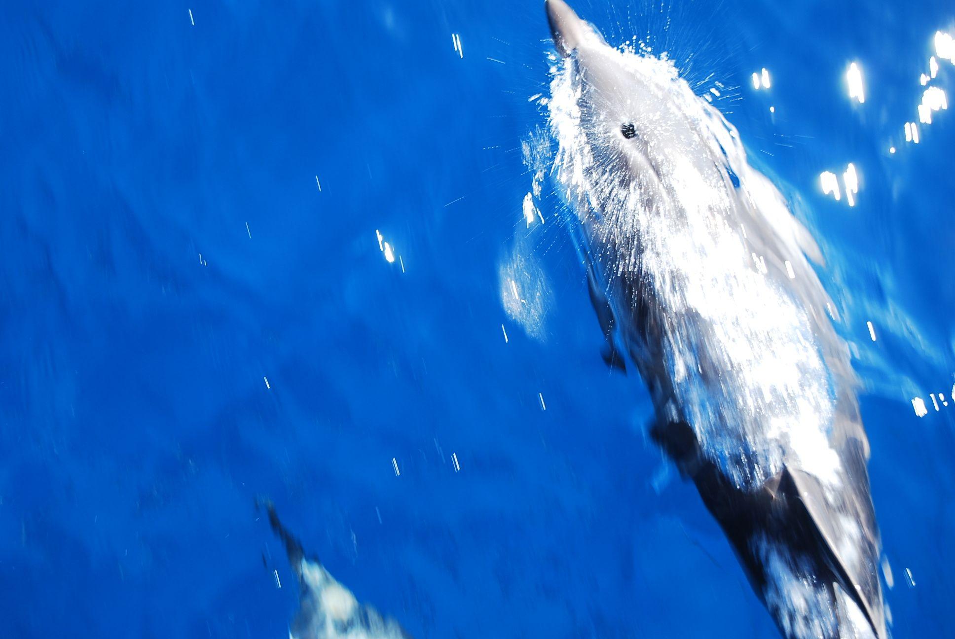 delphin_3