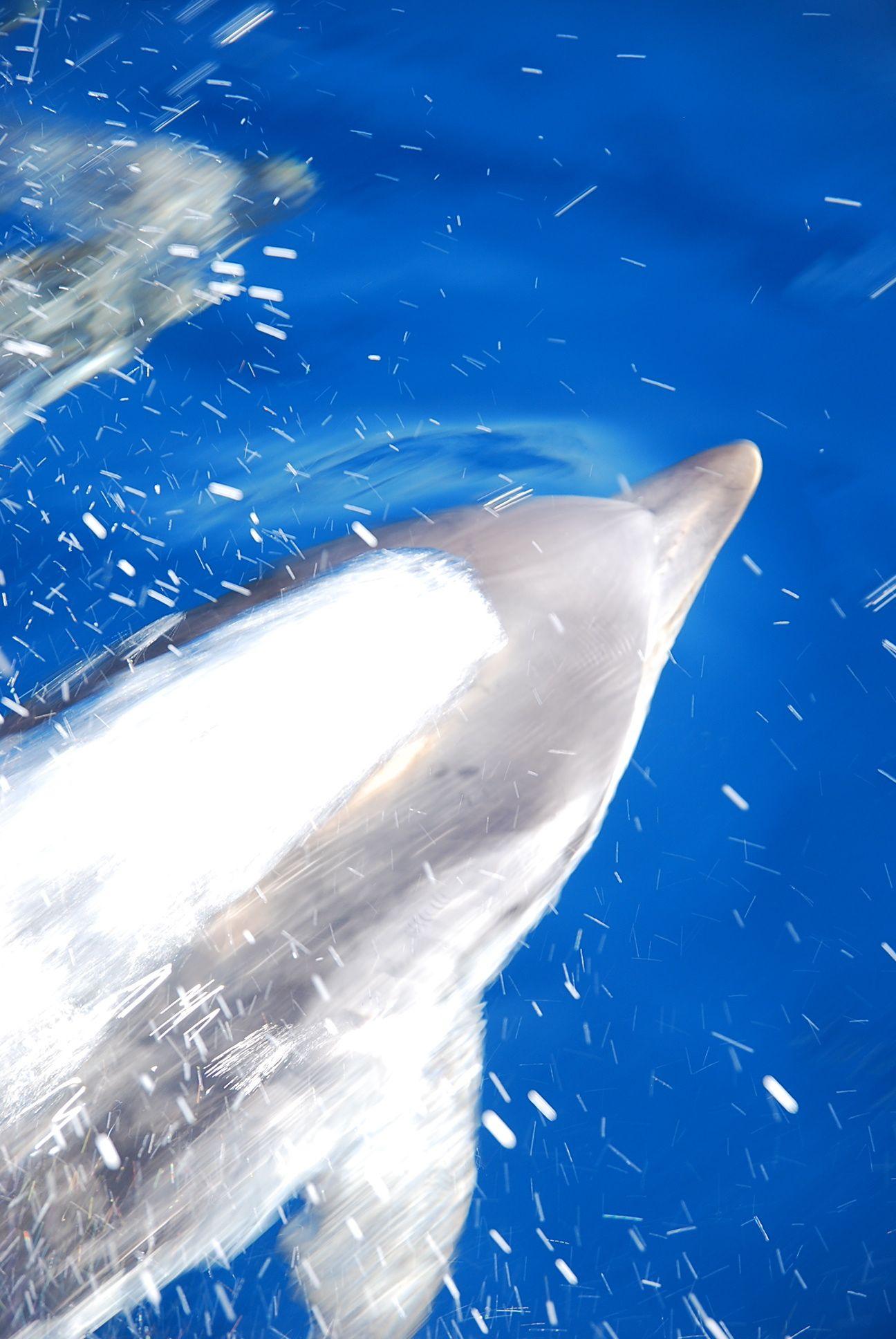 delphin_4